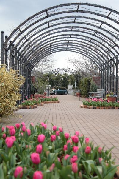 早春の横浜イングリッシュガーデン_a0227137_2184980.jpg