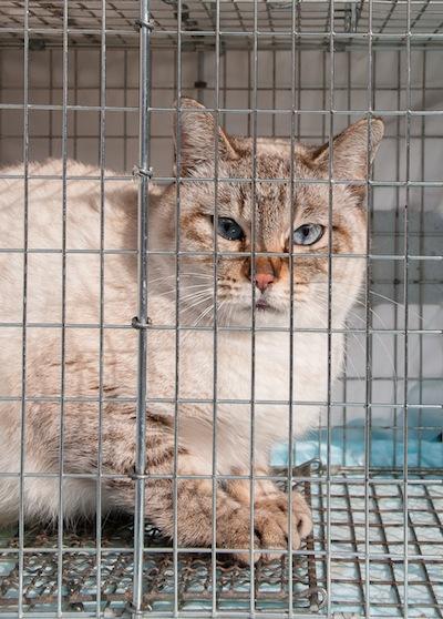 猫の避妊手術 お急ぎ下さい_d0073743_9264133.jpg