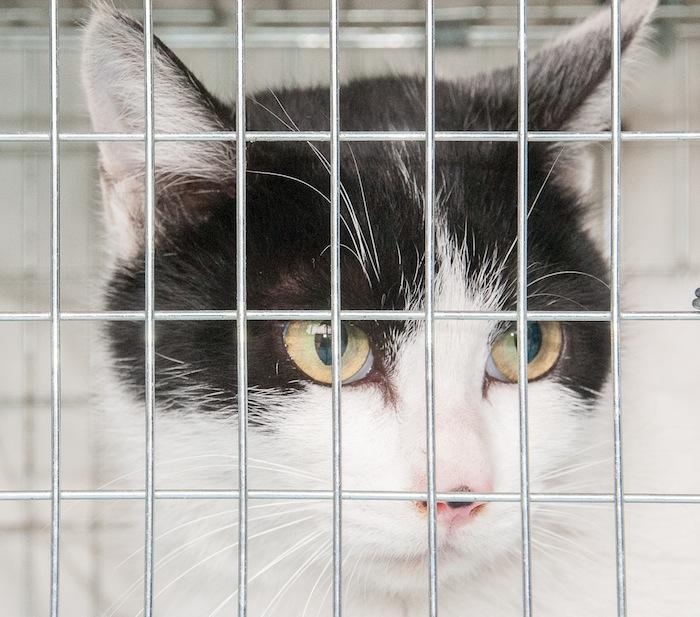 猫の避妊手術 お急ぎ下さい_d0073743_9265680.jpg