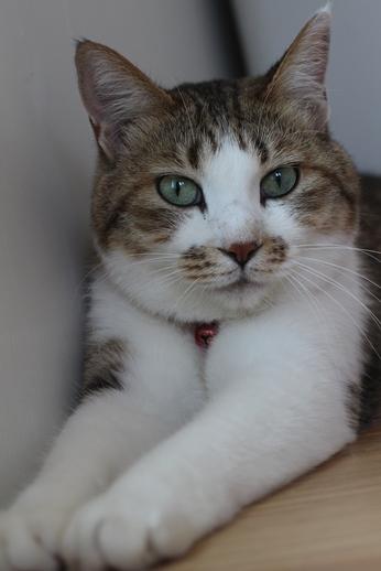 保護猫さん達、本日譲渡会に_e0151545_20351143.jpg