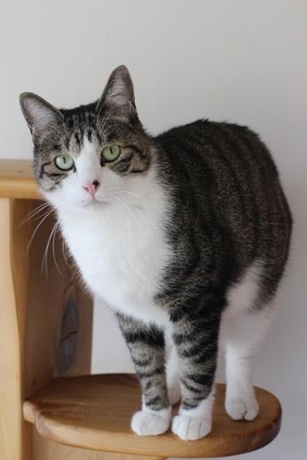 保護猫さん達、本日譲渡会に_e0151545_20354405.jpg