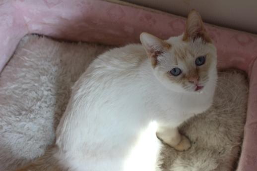 保護猫さん達、本日譲渡会に_e0151545_20355966.jpg