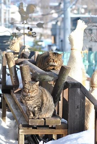 *猫の日*_e0159050_17591483.jpg