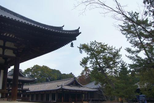 唐招提寺と室生寺へ_e0181373_20504150.jpg
