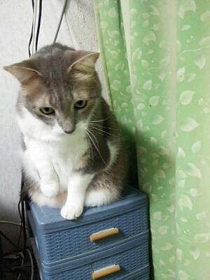 招き猫_b0112380_19182526.jpg