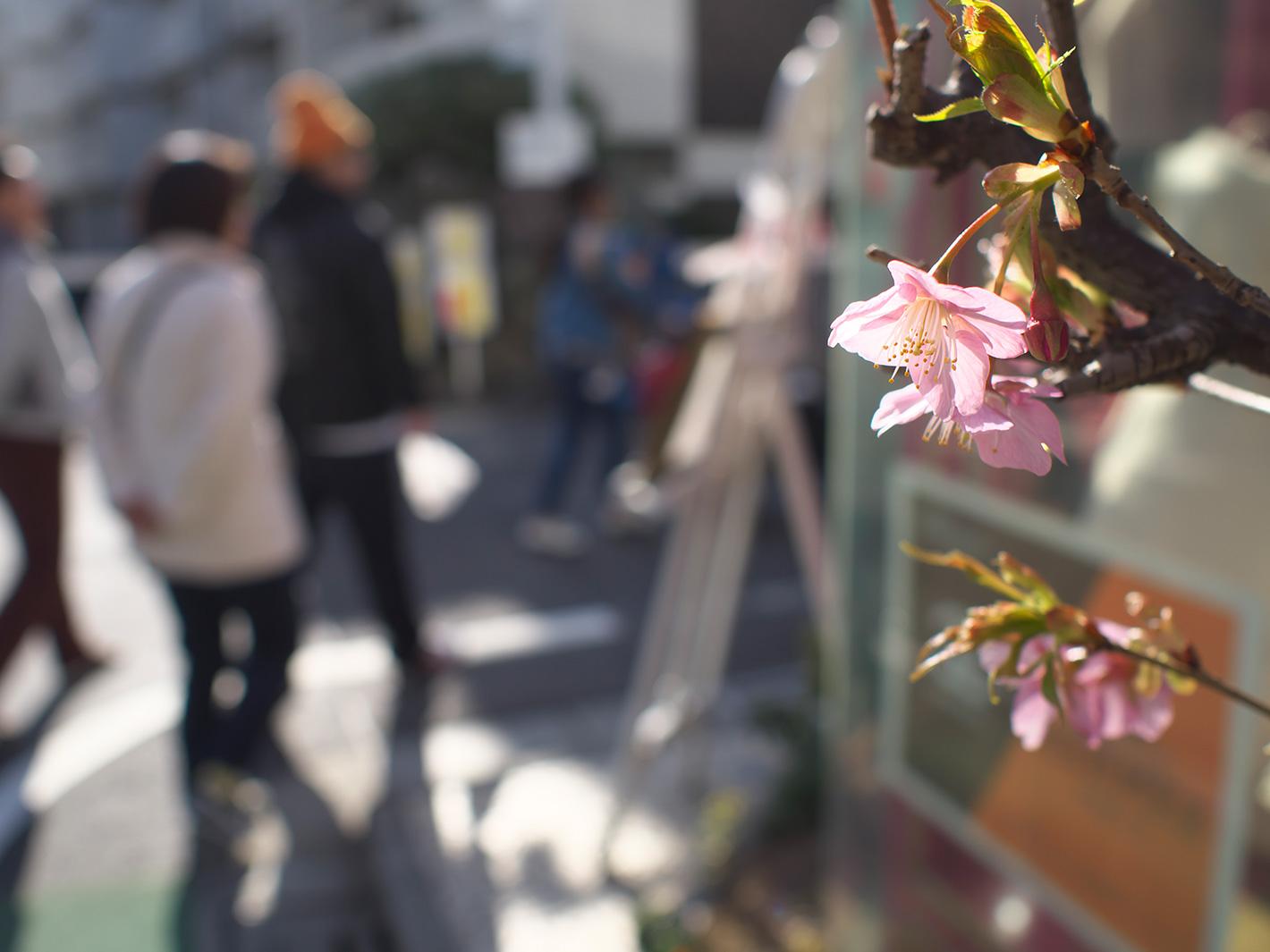 小さな春_f0121181_4432869.jpg