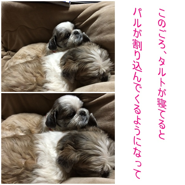 b0124693_19433239.jpg