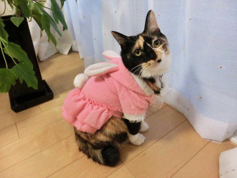【祝】ちくびウサギ、商標登録されました!!_d0224894_12532311.jpg