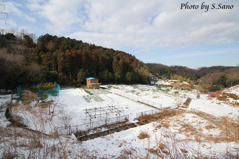 冬の侍従川_b0348205_20314071.jpg