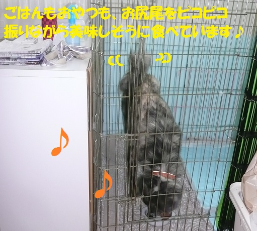 f0121712_753692.jpg