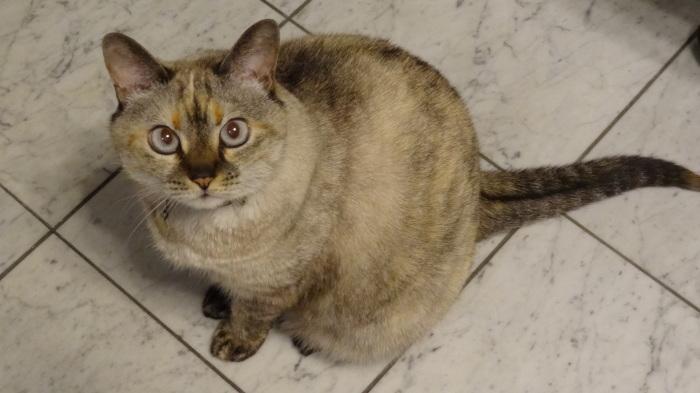 猫の日&相模屋さんの期間限定新商品!_b0290816_01440727.jpg