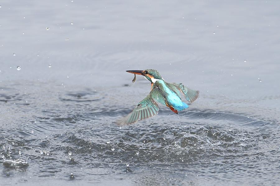 150223 上流雌の水物など_c0278820_19201663.jpg