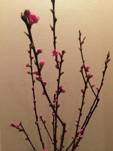 春が待ち遠しい……_d0028322_00171535.jpg