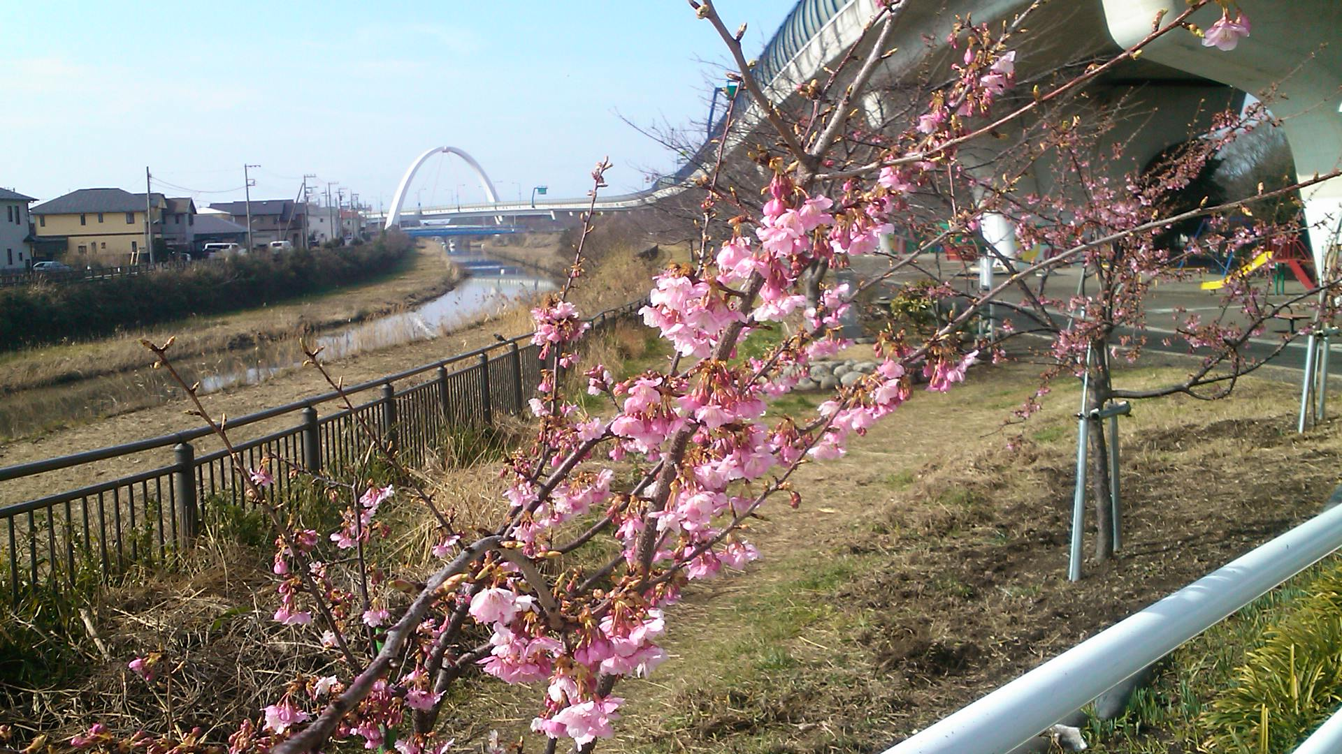 河津桜は3分咲き...ジャンバーからパーカに_b0137932_11173162.jpg