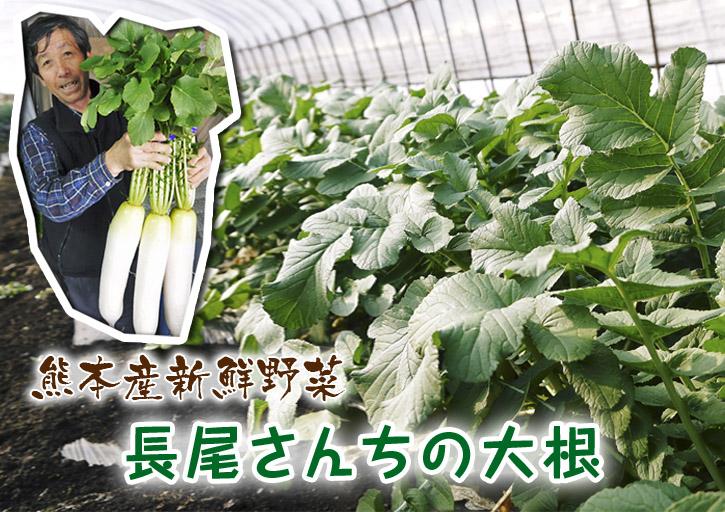 長尾ブランドの新鮮野菜!朝採りダイコン販売再スタート!!_a0254656_16485827.jpg