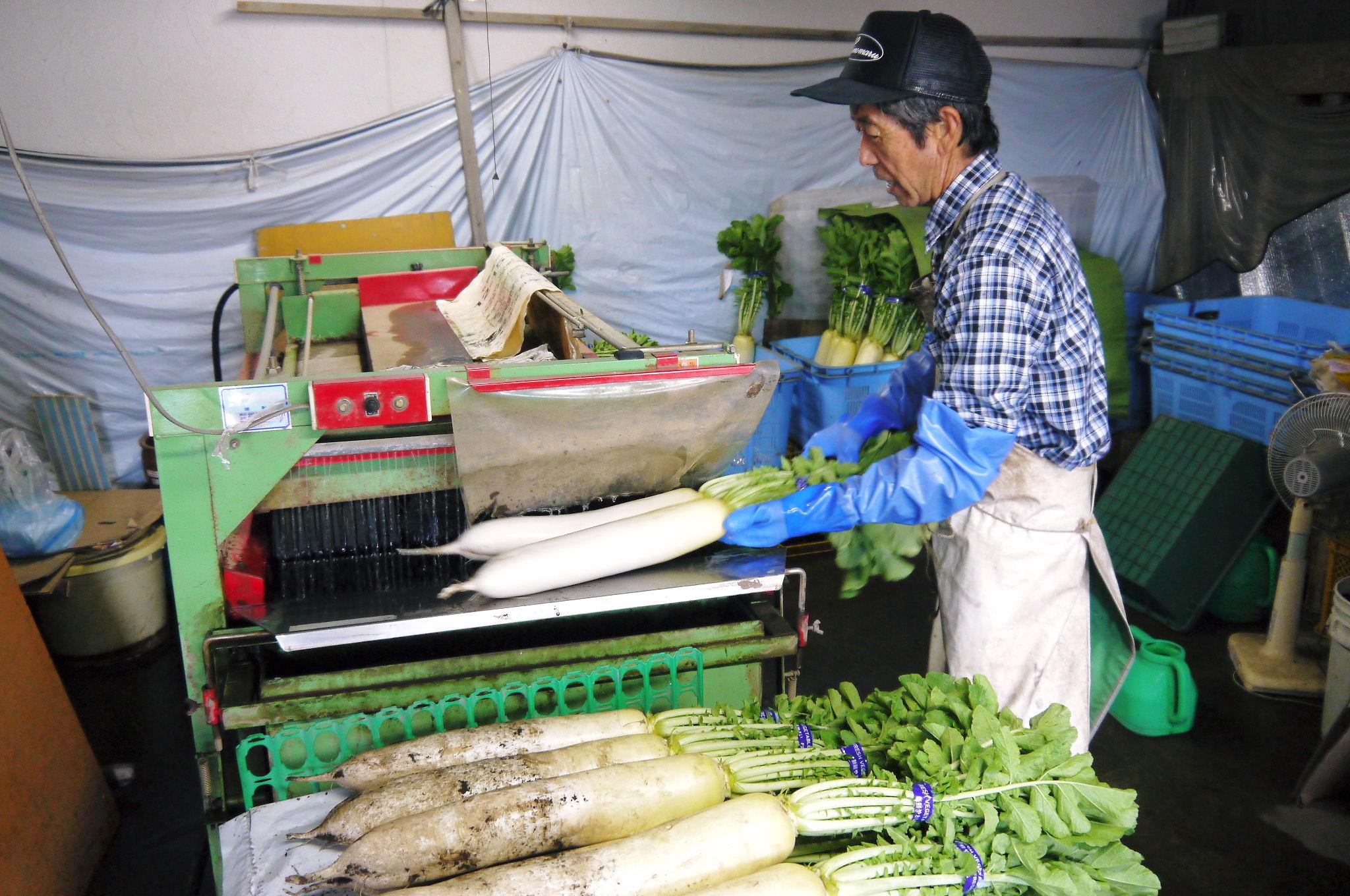 長尾ブランドの新鮮野菜!朝採りダイコン販売再スタート!!_a0254656_172115.jpg