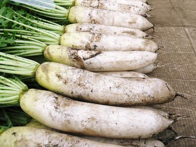長尾ブランドの新鮮野菜!朝採りダイコン販売再スタート!!_a0254656_1784764.jpg