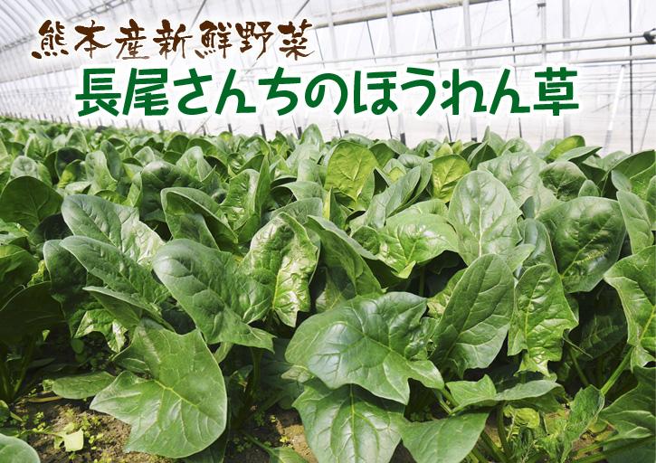 長尾ブランドの新鮮野菜!朝採りダイコン販売再スタート!!_a0254656_18254336.jpg