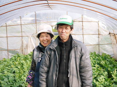 長尾ブランドの新鮮野菜!朝採りダイコン販売再スタート!!_a0254656_18332692.jpg