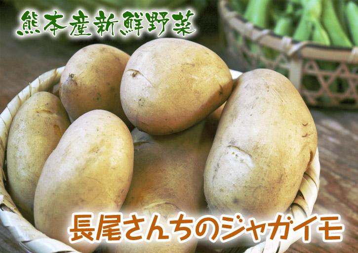 長尾ブランドの新鮮野菜!朝採りダイコン販売再スタート!!_a0254656_1837175.jpg