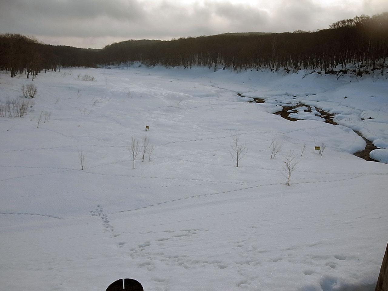 原生林をスキーで歩く・4_c0189970_1520484.jpg