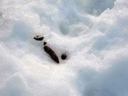 原生林をスキーで歩く・4_c0189970_17361027.jpg