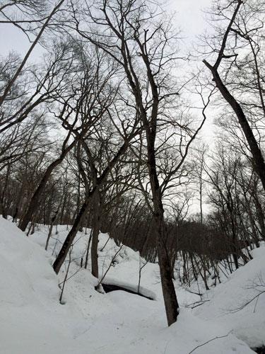 原生林をスキーで歩く・4_c0189970_17425981.jpg