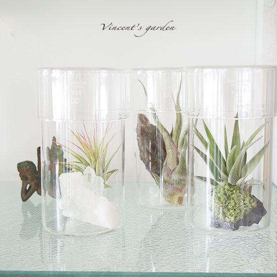 100均のエアプランツをお気に入りのグラスに飾るだけ!夏らしい作品もいっぱい!