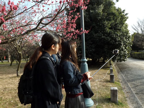 梅が始まった 京都御苑_e0048413_21283848.jpg