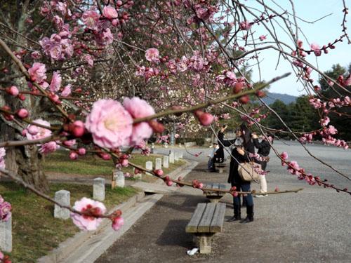 梅が始まった 京都御苑_e0048413_2129178.jpg