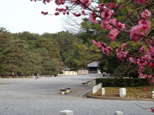 梅が始まった 京都御苑_e0048413_21292412.jpg