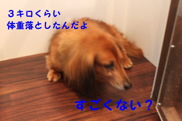 b0130018_9401126.jpg