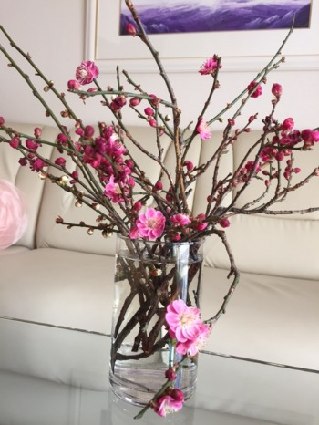 春ですね!_d0085018_23374180.jpg