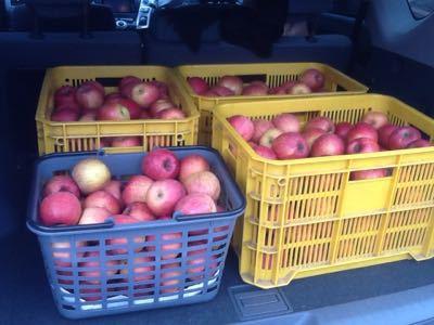 りんご・リンゴ・林檎_e0130334_4212210.jpg