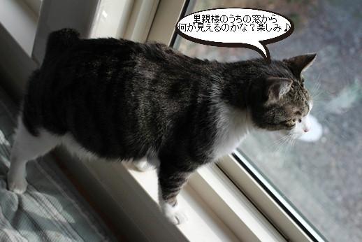 保護猫たちはリラックス_e0151545_20331704.jpg