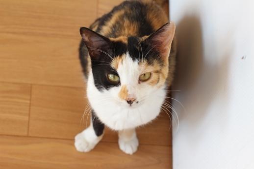 保護猫たちはリラックス_e0151545_20462676.jpg