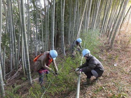 竹とゾウさん_e0272869_23554144.jpg