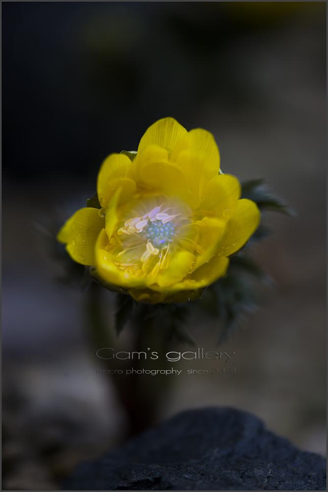 春の足音_f0195893_7113174.jpg