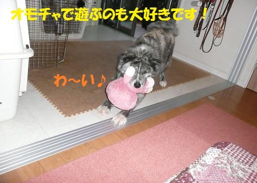 f0121712_893186.jpg