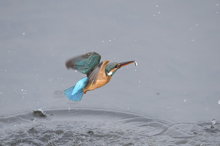 150225 雌の近い水物など_c0278820_18213222.jpg