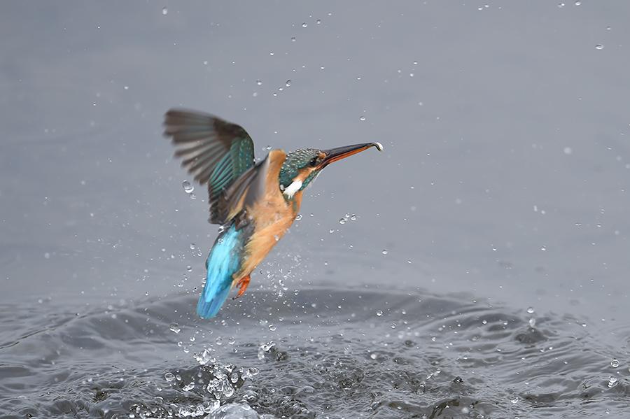 150225 雌の近い水物など_c0278820_1821649.jpg