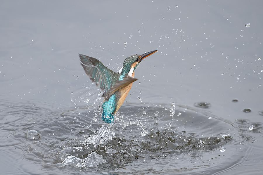 150225 雌の近い水物など_c0278820_1823086.jpg