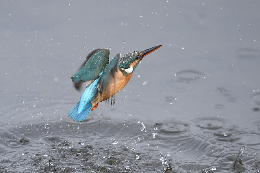 150225 雌の近い水物など_c0278820_1824362.jpg