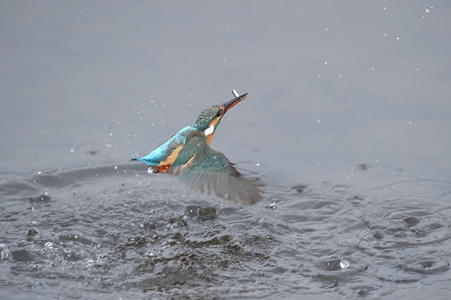 150225 雌の近い水物など_c0278820_18271021.jpg