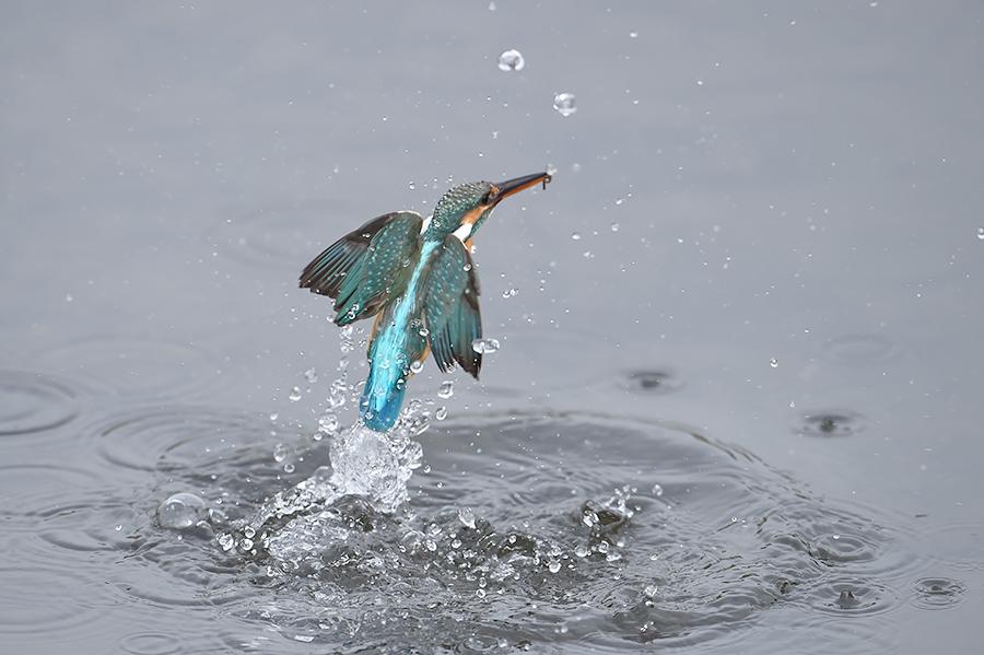 150225 雌の近い水物など_c0278820_1830346.jpg