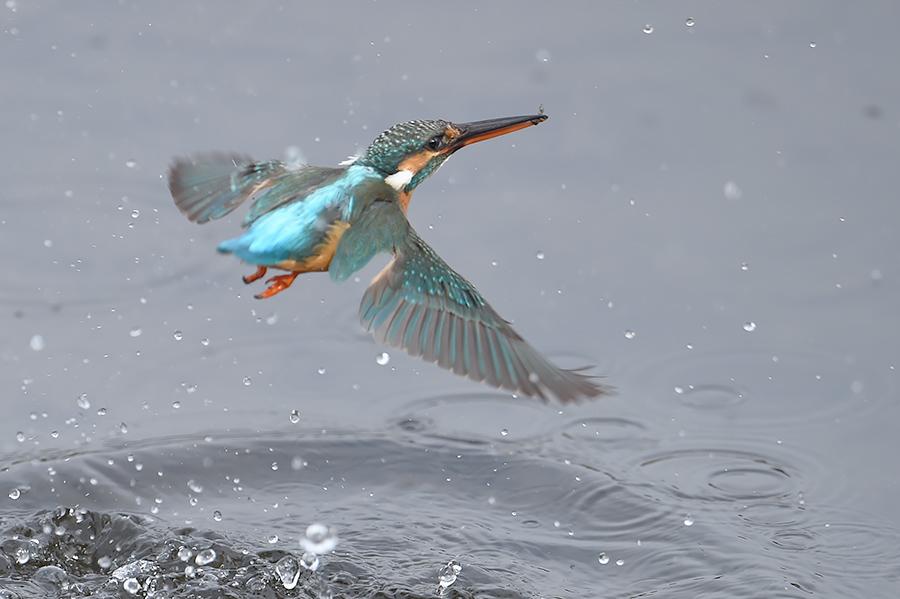 150225 雌の近い水物など_c0278820_1831555.jpg