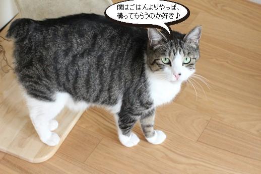 今日の保護猫さん_e0151545_21511732.jpg
