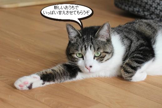 今日の保護猫さん_e0151545_21513051.jpg