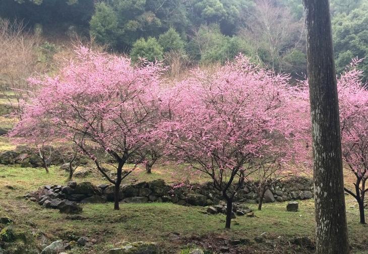 長崎市の岩屋山へ_b0161750_182958.jpg