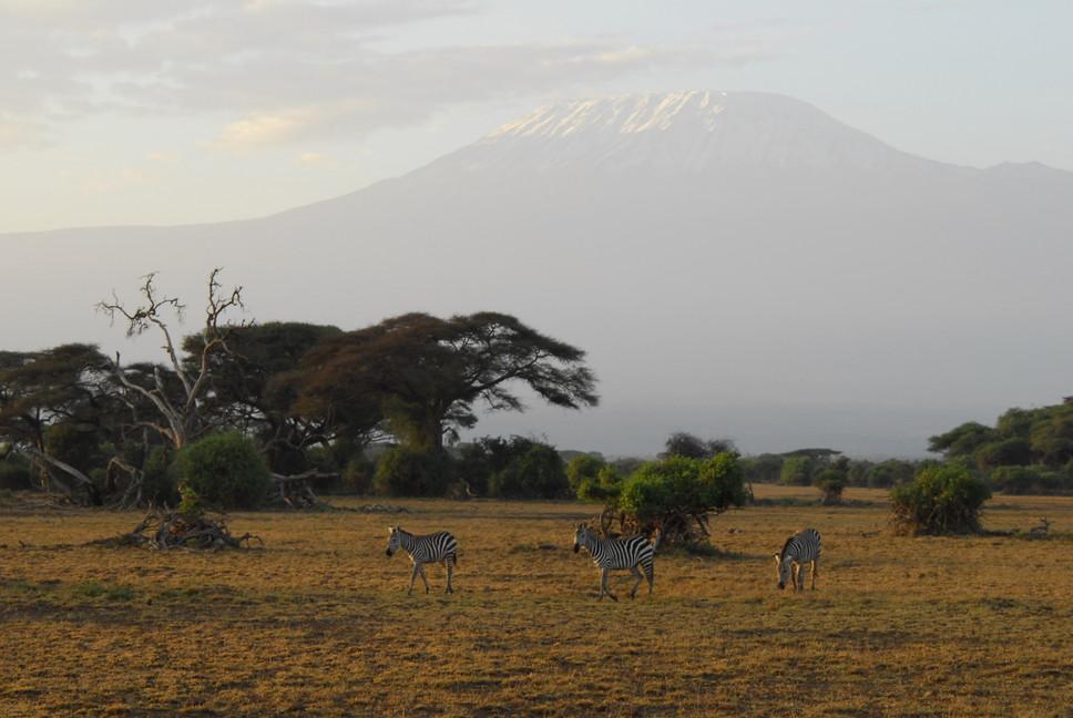 """2015年2月「アフリカの大地に聳える白き峰、キリマンジャロ」 February 2015 \""""Kilimanjaro, Africa\""""_c0219616_101963.jpg"""